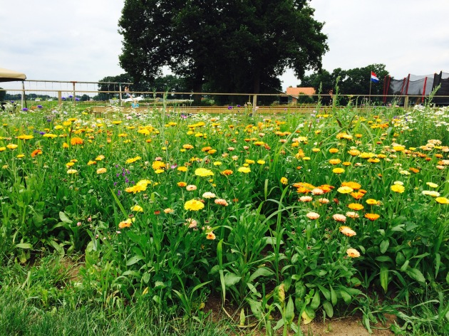 Bloemen plukken in Twente